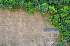 Efeu-Wand Stockfoto