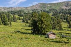 Ein altes Blockhaus in einem Koniferenwald in Bergen Altai Krai Lizenzfreies Stockfoto