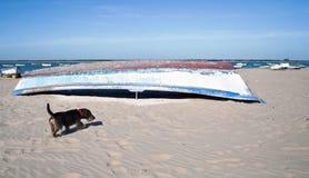 Ein altes Boot mit einem Hund Stockfoto