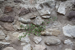 Ein altes Steinwandbraun, Weiß, schwarze große Steine mit grünem Gras Klassische Steinmauern von mittelalterlichen Schlössern in  Stockbilder