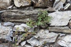 Ein altes Steinwandbraun, Weiß, schwarze große Steine mit grünem Gras Klassische Steinmauern von mittelalterlichen Schlössern in  Lizenzfreie Stockfotografie