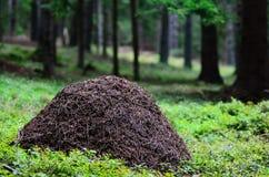 Ein Ameisenhügel im Kiefernholz Lizenzfreie Stockfotografie