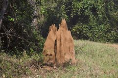 Ein Ameisenhügel, wildes Leben-Schongebiet Nagzira, Bhandara, nahe Nagpura, Maharashtra lizenzfreie stockfotos