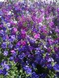 Ein anderer Garten in der Stadt Stockbilder