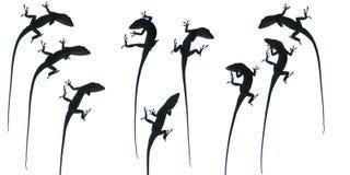 Ein Aneole - viele Haltungen Stockfoto