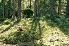 Ein angefüllter Elch in einem grünen gemütlichen Wald stockfoto