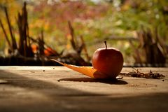 Ein Apfel Lizenzfreies Stockbild