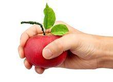 Ein Apfel in der Hand Stockfoto