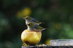 Ein Apfel ein Tag hält den Doktor weg Lizenzfreie Stockfotografie