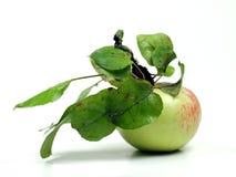 Ein Apple Stockfotos