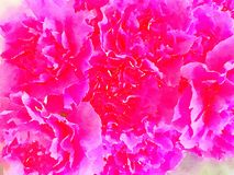 Ein Aquarell von rosa Gartennelken lizenzfreies stockbild