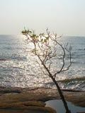 Ein attraktiver Baum mit seinen Niederlassungen gegen Brighr-Sonnenlicht mit blauer Ozean-wasser- natürlichem Hintergrund Stockfotografie