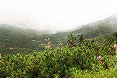 Ein aufrüttelndes Bild eines enormen Waldes voll der Stockbäume auf dem nebeligen Hintergrund stockfoto