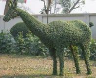 Ein Auge, das grünen Topiary von Rotwild fängt stockfotografie