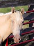 Ein-Auge Pferd Stockfoto
