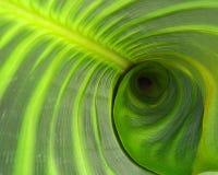 Ein ausgedehntes grünes Blatt lizenzfreie stockfotografie