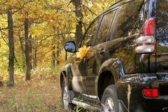 Ein Auto auf Blättern Lizenzfreie Stockbilder