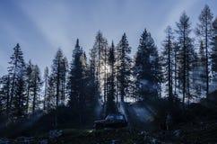 Ein Auto 4x4 in einem Wald mit hohen Bäumen mit dem Sonnenlicht, das durch glänzt stockbilder