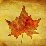 Ein Autumn Leaf vektor abbildung