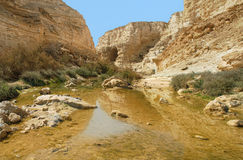 Ein Avdat Canyon. Israel. Stock Images