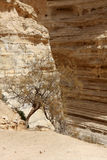 Ein Avdat Canyon, Israel Royalty Free Stock Images