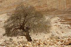 Ein Avdat Canyon, Israel Royalty Free Stock Photo