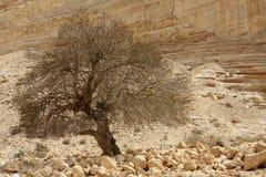 Ein Avdat Canyon, Israel Royalty Free Stock Photo