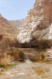 Ein Avdat gorge. Royalty Free Stock Photo