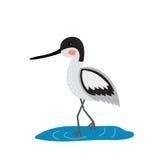 Ein Avocet, der in der Wasserzeichentrickfilm-figur steht Stockfotos