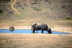 Ein Büffel und eine Leopard-Schildkröte in Addo Elephant National Park, Südafrika Stockfotos