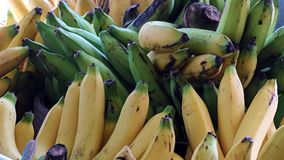 Ein Bündel Bananen stock footage
