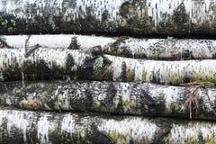 Ein Bündel Birkenbauholz stockbild