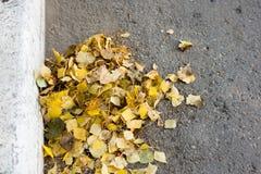 Ein Bündel Blätter der gelben Birke, weg gefegt zum Rand der Straße Stockbilder