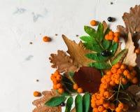 Ein Bündel der reifen orange Eberesche mit grünen Blättern Trockene Blätter des Herbstes Schwarze Beeren Weißer Stein oder Gips Lizenzfreies Stockbild