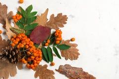 Ein Bündel der reifen orange Eberesche mit grünen Blättern Trockene Blätter des Herbstes Schwarze Beeren Weißer Stein oder Gips Lizenzfreies Stockfoto
