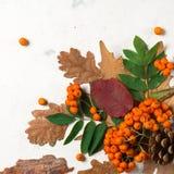 Ein Bündel der reifen orange Eberesche mit grünen Blättern Trockene Blätter des Herbstes Schwarze Beeren Weißer Stein oder Gips Stockbilder