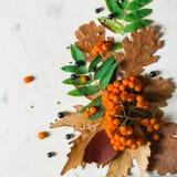 Ein Bündel der reifen orange Eberesche mit grünen Blättern Trockene Blätter des Herbstes Schwarze Beeren Weißer Stein oder Gips Lizenzfreie Stockbilder