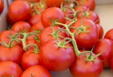 Ein Bündel der roten Tomate auf dem Markt Lizenzfreie Stockfotografie