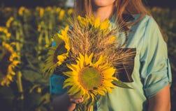 Ein Bündel des Weizens und der Sonnenblume in den Händen eines Mädchens Lizenzfreie Stockfotografie