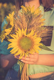Ein Bündel des Weizens und der Sonnenblume in den Händen eines Mädchens Stockfotos