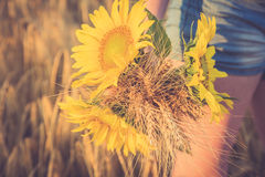 Ein Bündel des Weizens und der Sonnenblume in den Händen eines Mädchens Stockbilder