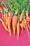 Ein Bündel Karotten auf rotem Hintergrund Lizenzfreie Stockfotos
