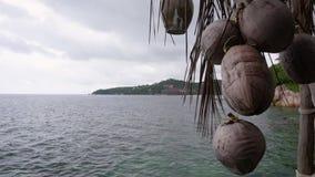 Ein Bündel Kokosnüsse auf dem Hintergrund eines tropischen Strandes stock video