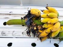 Ein Bündel reife Bananen werden gebissen Stockfotografie