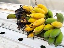 Ein Bündel reife Bananen werden gebissen Lizenzfreies Stockfoto