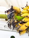 Ein Bündel reife Bananen werden gebissen Stockfotos
