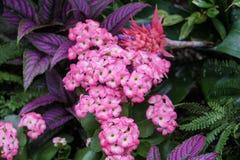 Ein Bündel rosa Blumen im Regenwald lizenzfreies stockfoto