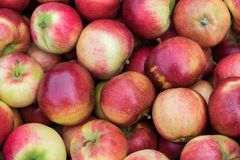 Ein Bündel schöne frische rote, gelbe und grüne Äpfel Lizenzfreie Stockfotos