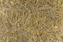 Ein Bündel Stroh aus den Grund Stockbilder