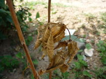 Ein Bündel trockene Blätter Lizenzfreie Stockbilder